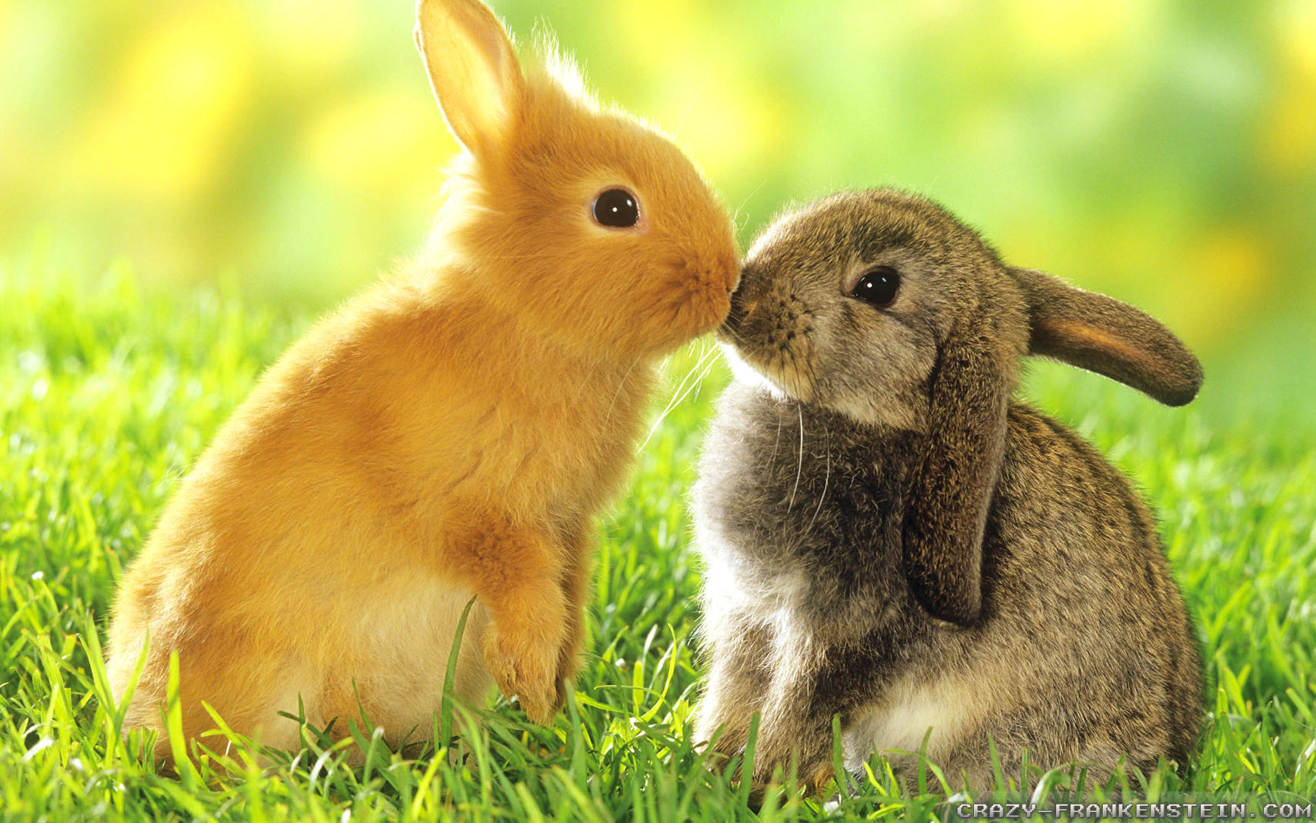 spring-bunny-easter-wallpapers-event-images-easter-wallpaper